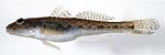 林崎漁港でチョイ投げのハゼ釣り 14cmを頭に61匹の大漁!
